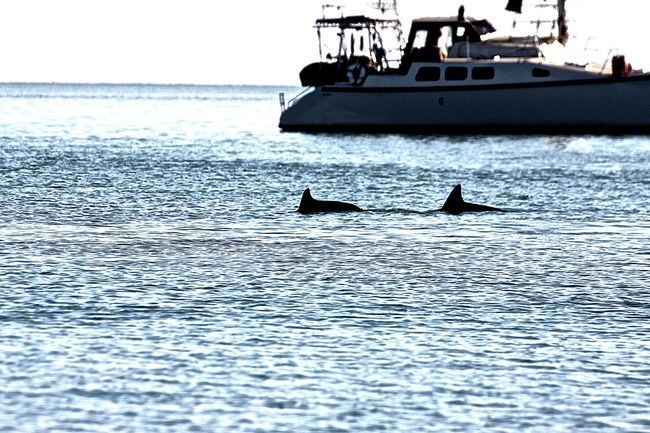 Monkey Mia, Western Australia WesternAustralia Monkeymia Dolphins Dolphin Dolphin Watching  Australia Western Australia Australien