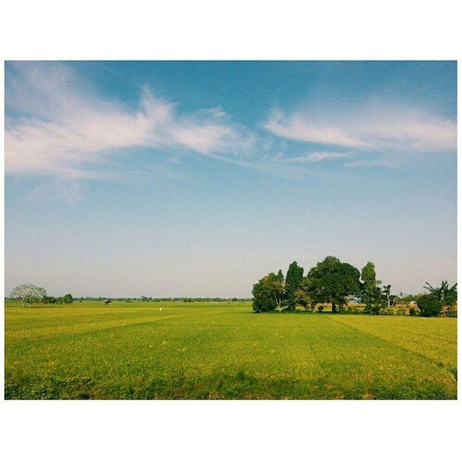 On the railway to the Kenanamu Airport. 🚄🚄🚄 Railway Kualanamu Airport Nature Breathtaking 😊