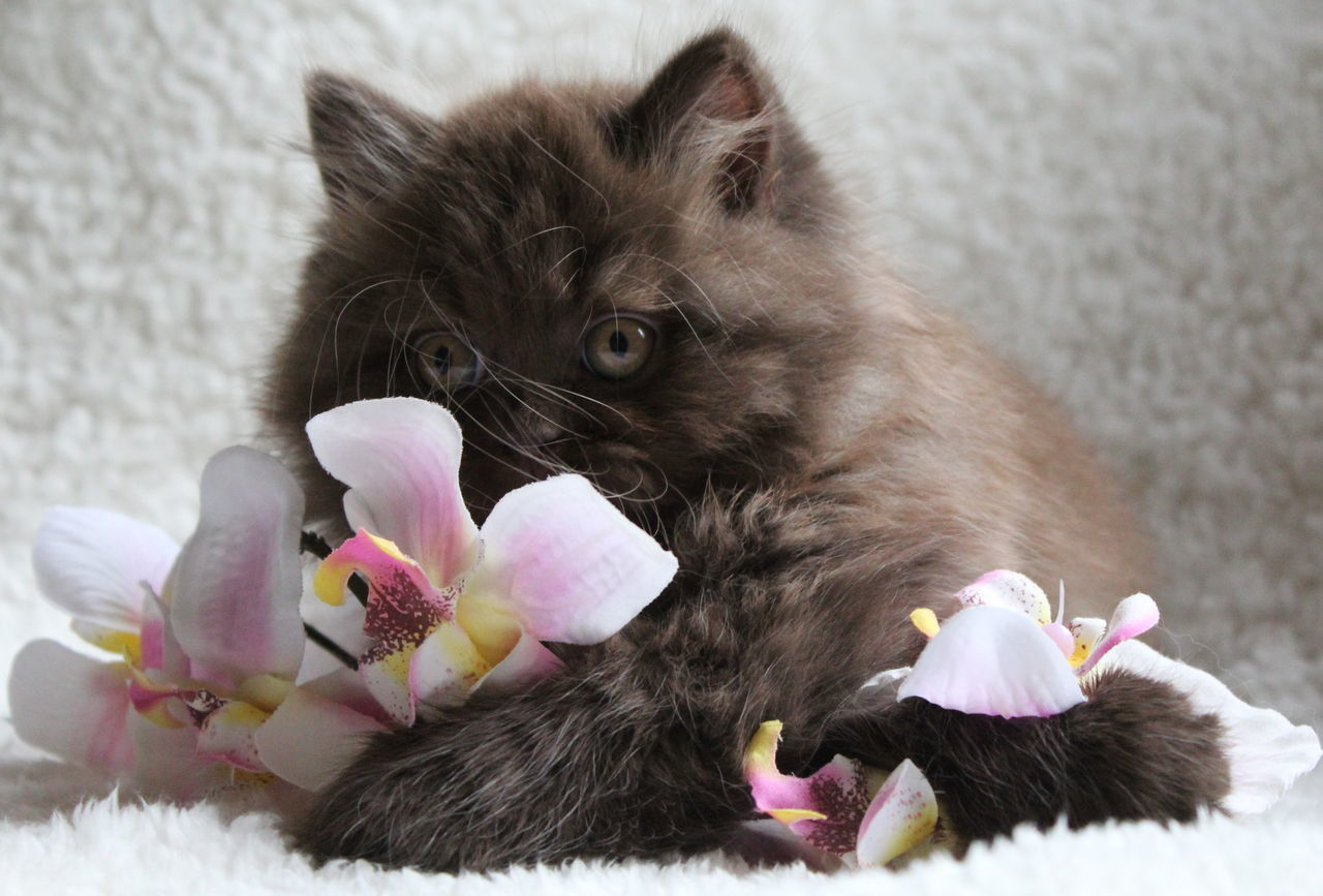 Close-Up Of Kitten With Pink Flowers On Rug