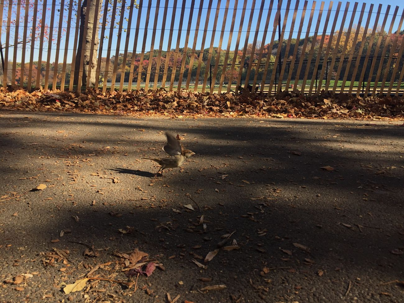 Do you see it? This cutie about to take flight ❤️🐦🐤 Bird NYC New York City Brooklyn Prospect Park