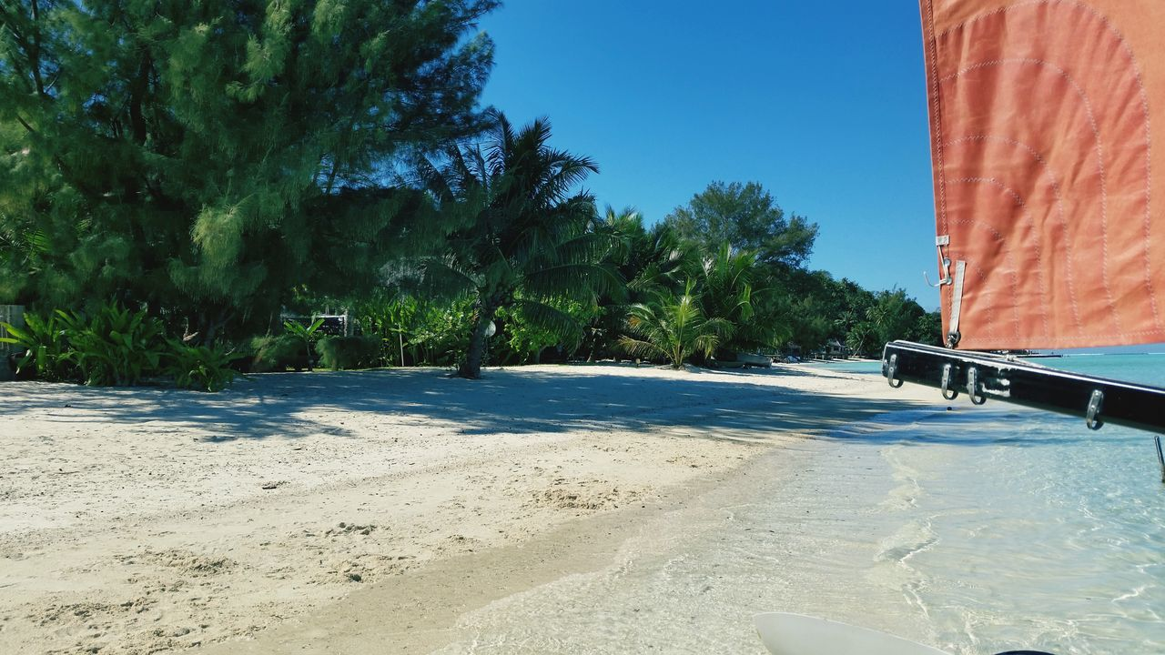 sand, tree, beach, no people, day, nature, sunlight, sea, outdoors, clear sky, sky