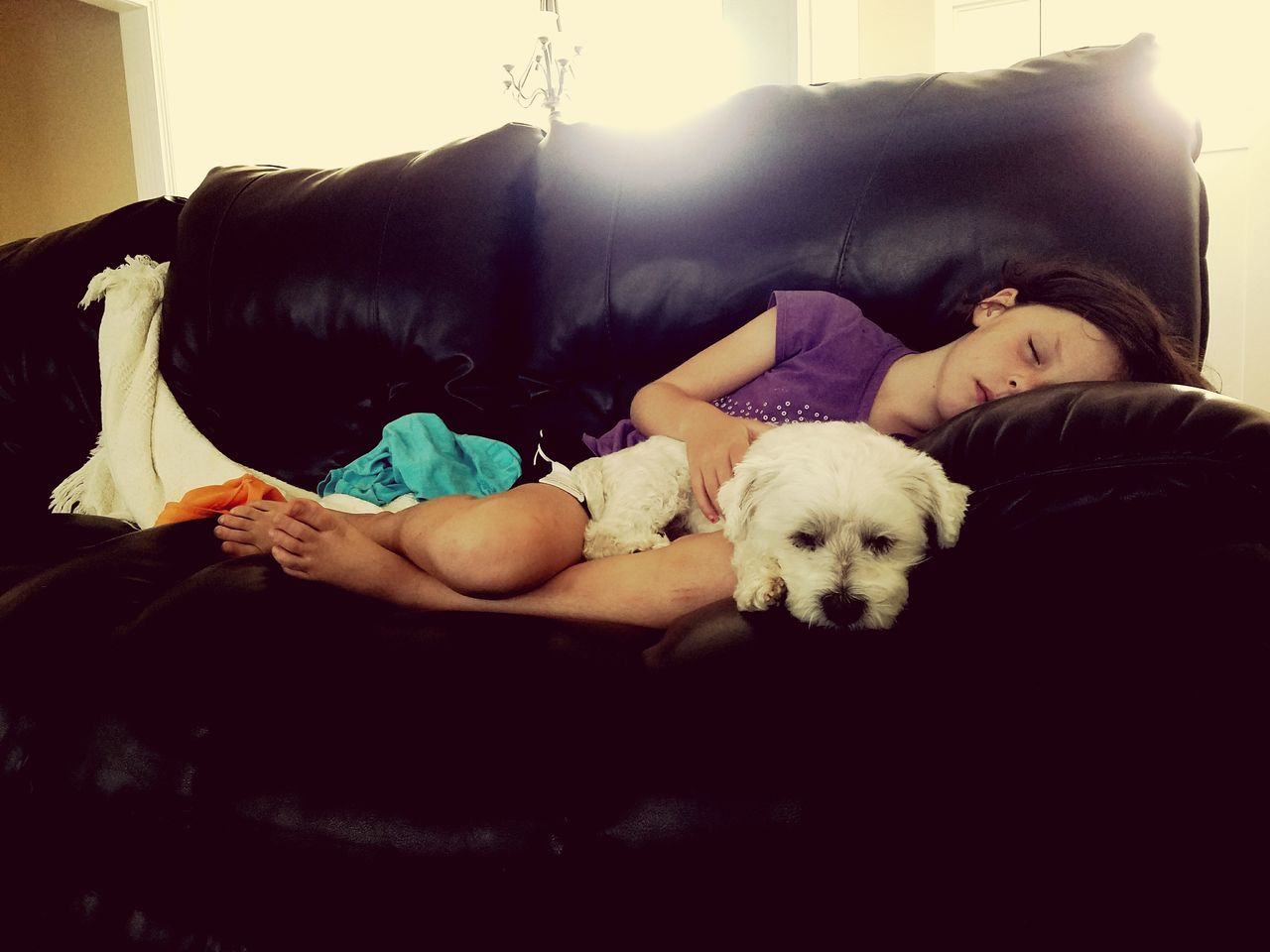 Home Is Where The Art Is Dadstuff Dadlife Daddy's Girl Bichonfrise Doglife DogLove Naptime
