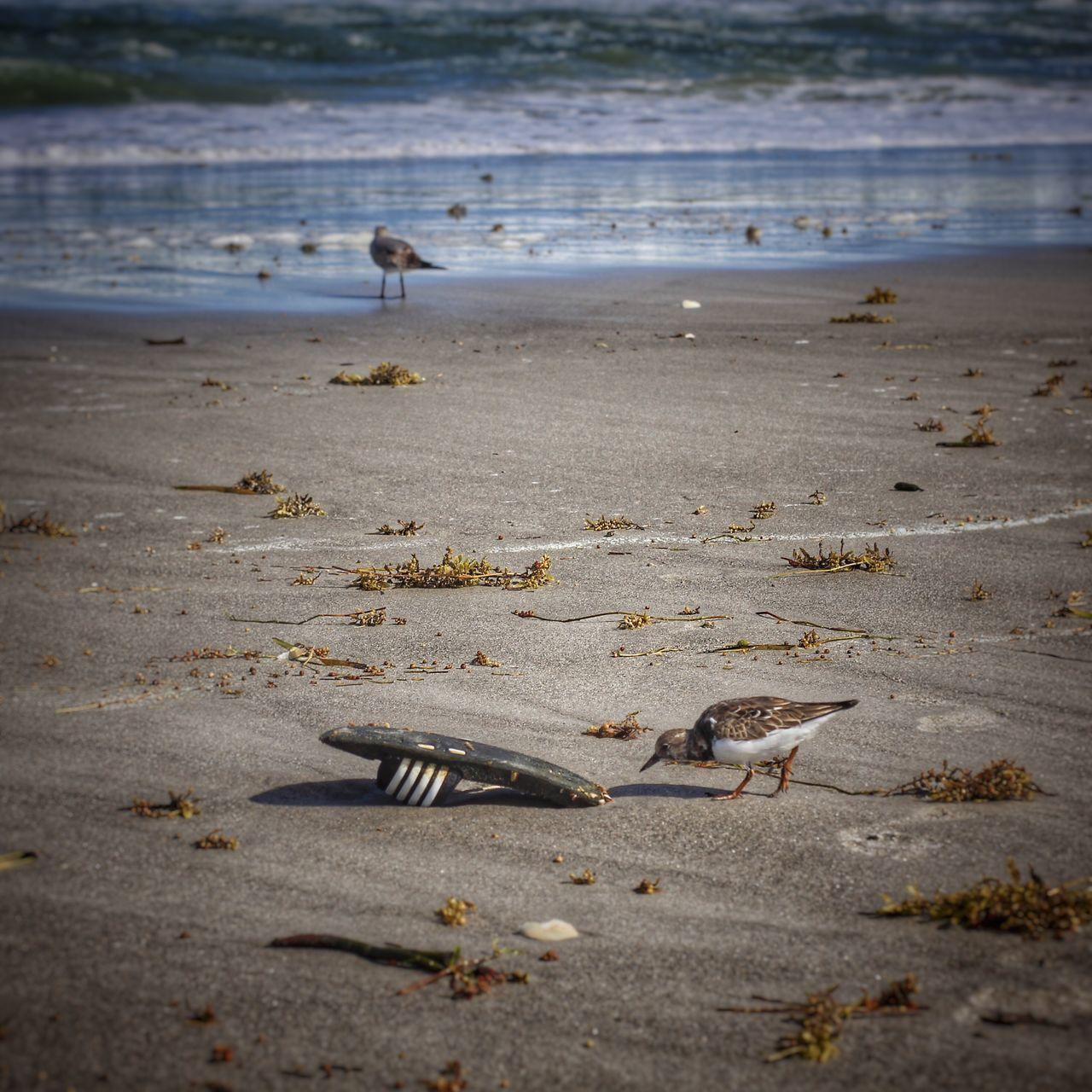 Sandpiper & flipflop Sandpiper Beach Bird Shore Shore Birds Flipflops Flip Flops Flotsam Melbourne Beach, FL Beach Birds