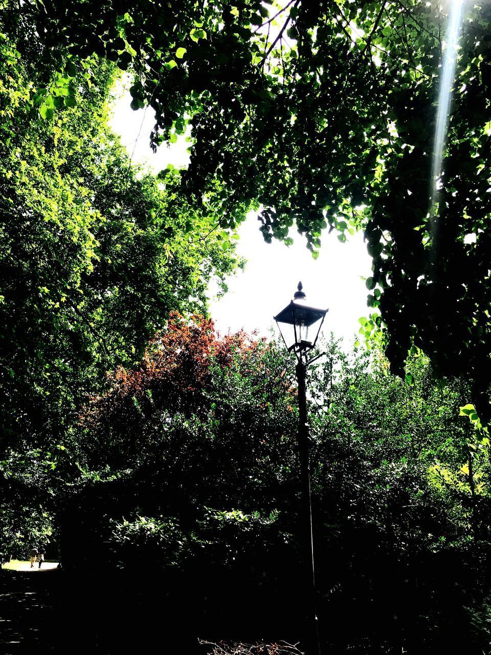 tree, lighting equipment, low angle view, outdoors, street light, no people, growth, day, gas light, silhouette, nature, illuminated, technology, beauty in nature, sky