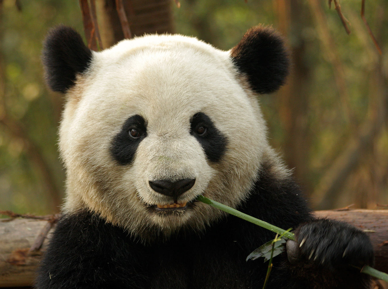 Beautiful stock photos of kunst, Animal Themes, Animal Wildlife, Animals In The Wild, Bamboo - Plant