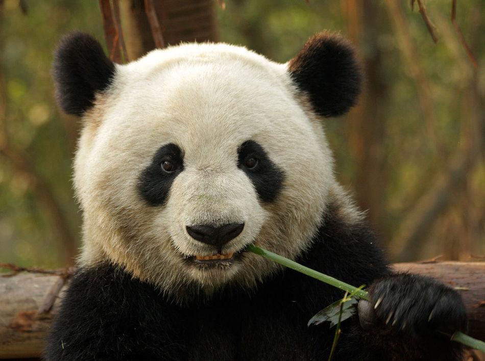 Beautiful stock photos of kunst, Animal Themes, Animal Wildlife, Animals In The Wild, Bamboo - Plant