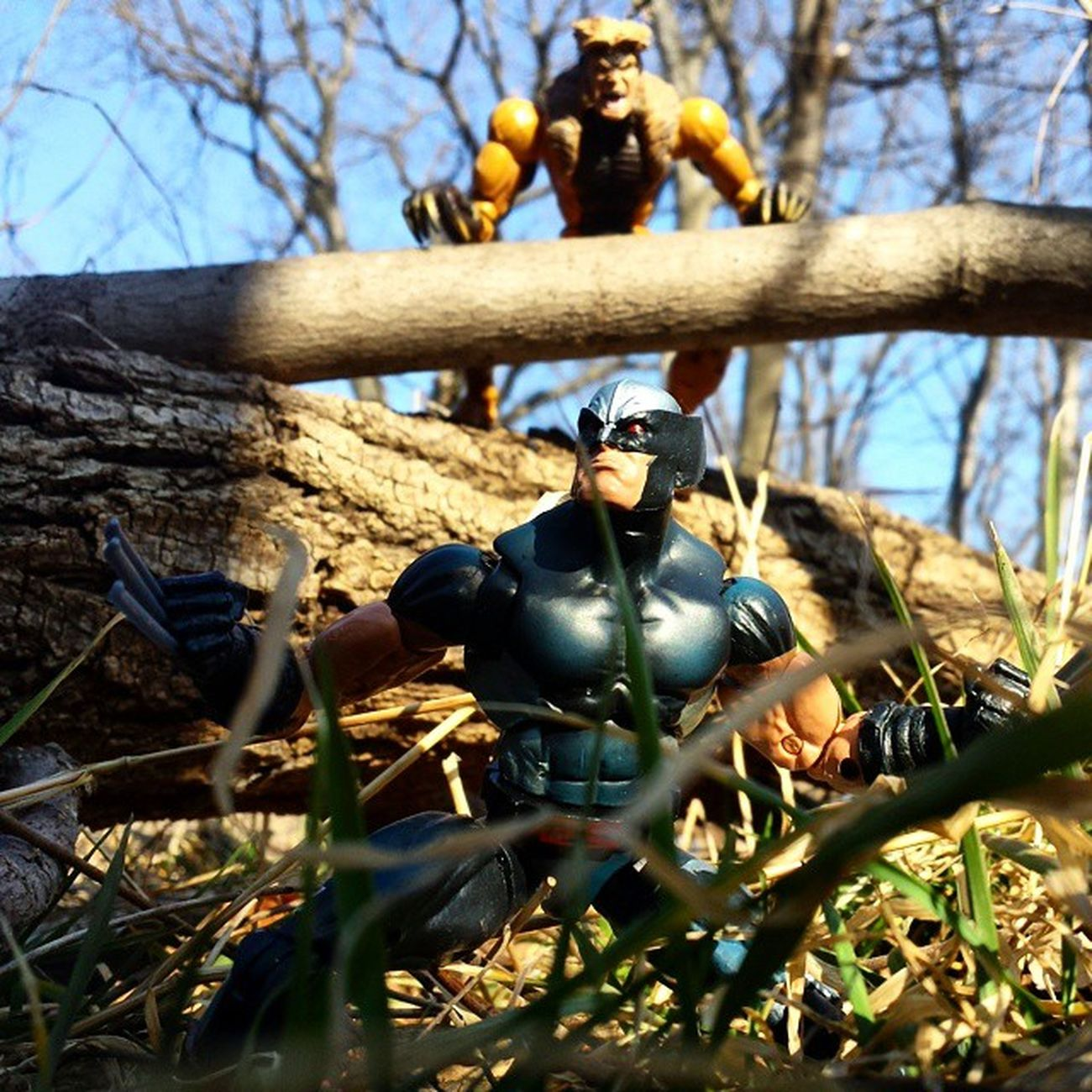 Decided to try out taking pictures Outside . Thanks to @thetoned for the Wolverine . Logan Thebestatwhathedoes SABERTOOTH Marvel Marvellegends Toyphotography Toypizza Toysarehellasick Toyfan Toyslagram Toyunion Toycollector Toycommunity Toycollection Marveluniverse Comics Marvelcomics Marvelnation Hasbro