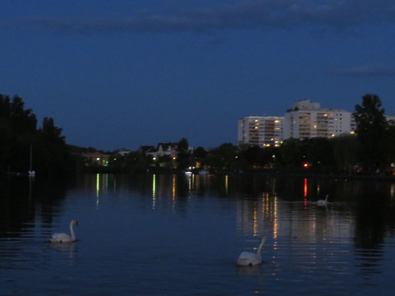 Animal Themes Animals In The Wild Bird Building Exterior Built Structure Evening Atmosphere Illuminated Main Night Lights Nightphotography Offenbach Am Main Reflection Relaxing Moments River Swans Swimming Tranquil Scene Tranquility Water Water Bird Water Reflections Waterfront