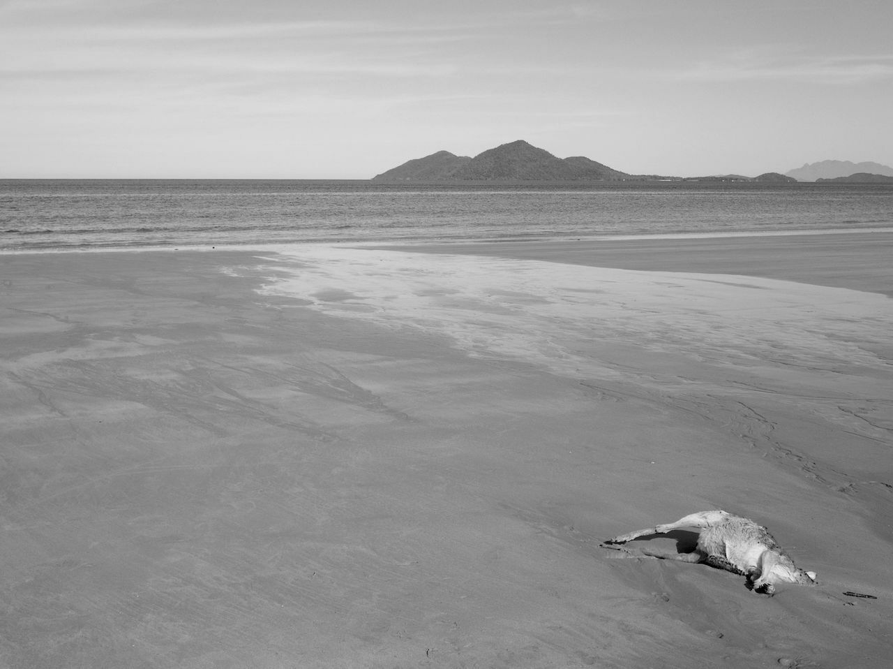 This is the end. Melancholic Landscapes Melancholy Beach Photography NEM Black&white NEM BadKarma EyeEm Best Shots - Black + White Fortheloveofblackandwhite Landscape_Collection Depressed Getting Inspired