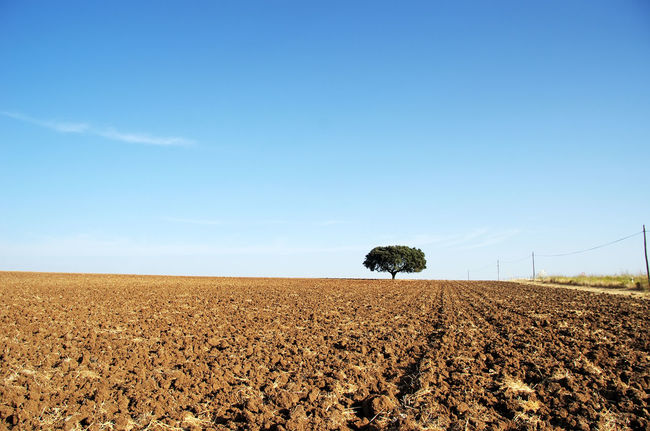 plowed field at Alentejo region, south of Portugal Alentejo Alentejo,Portugal Field Horizon Over Land Landscape Nature Plowed Field Rural Scene Scenics Sky Tranquil Scene Tranquility
