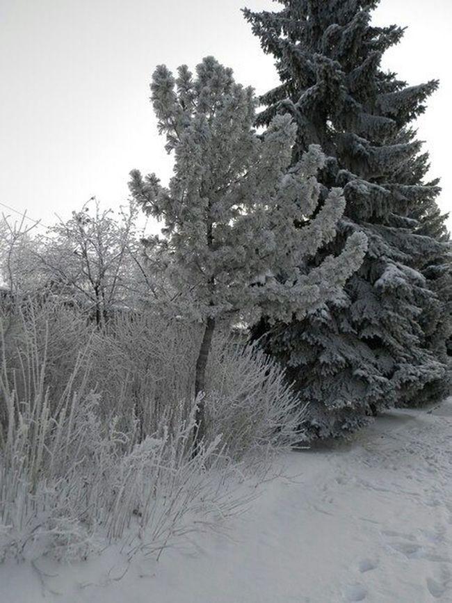 Winter Trees Snow Russia
