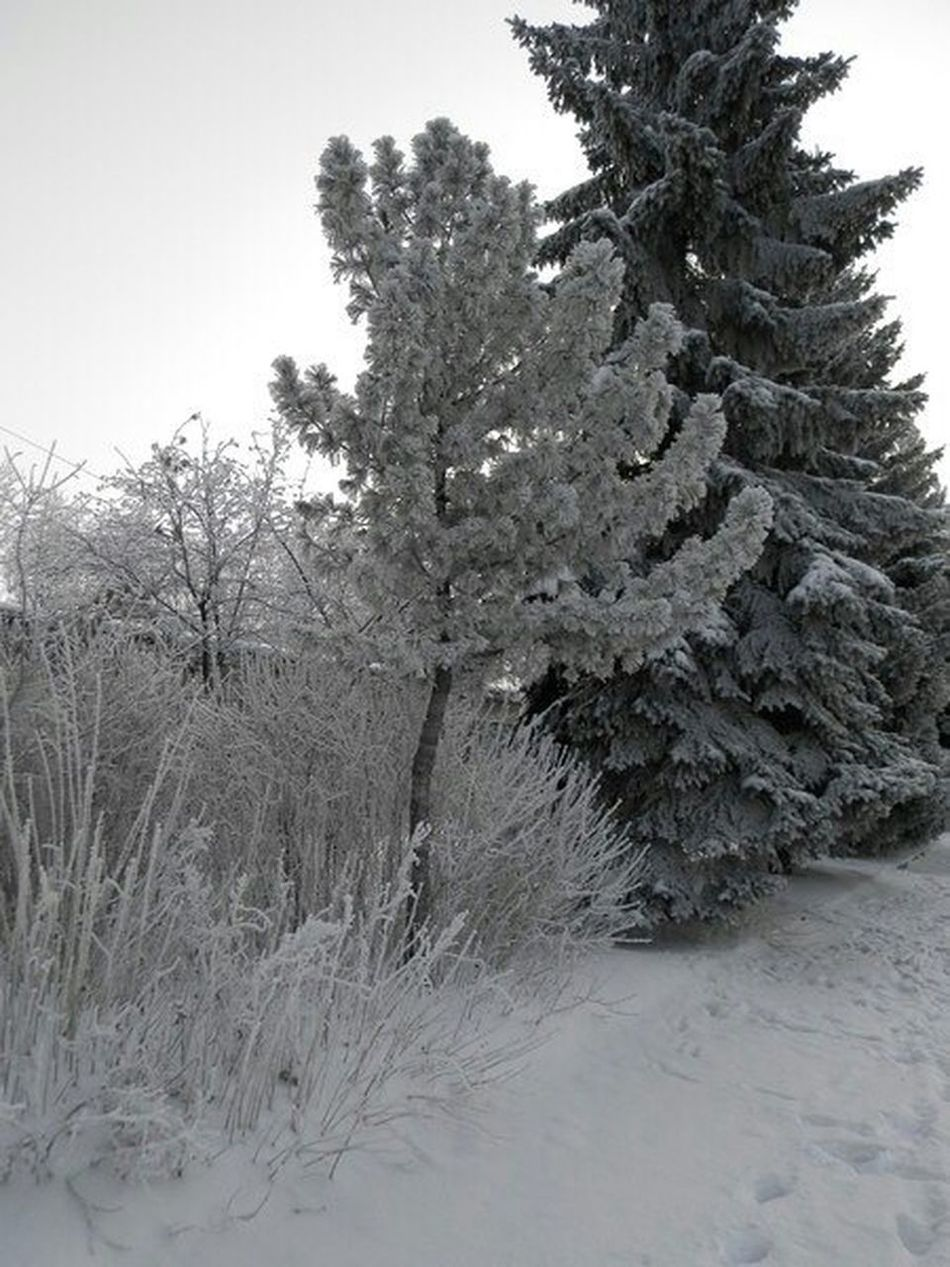 Winter Trees Snow Russia