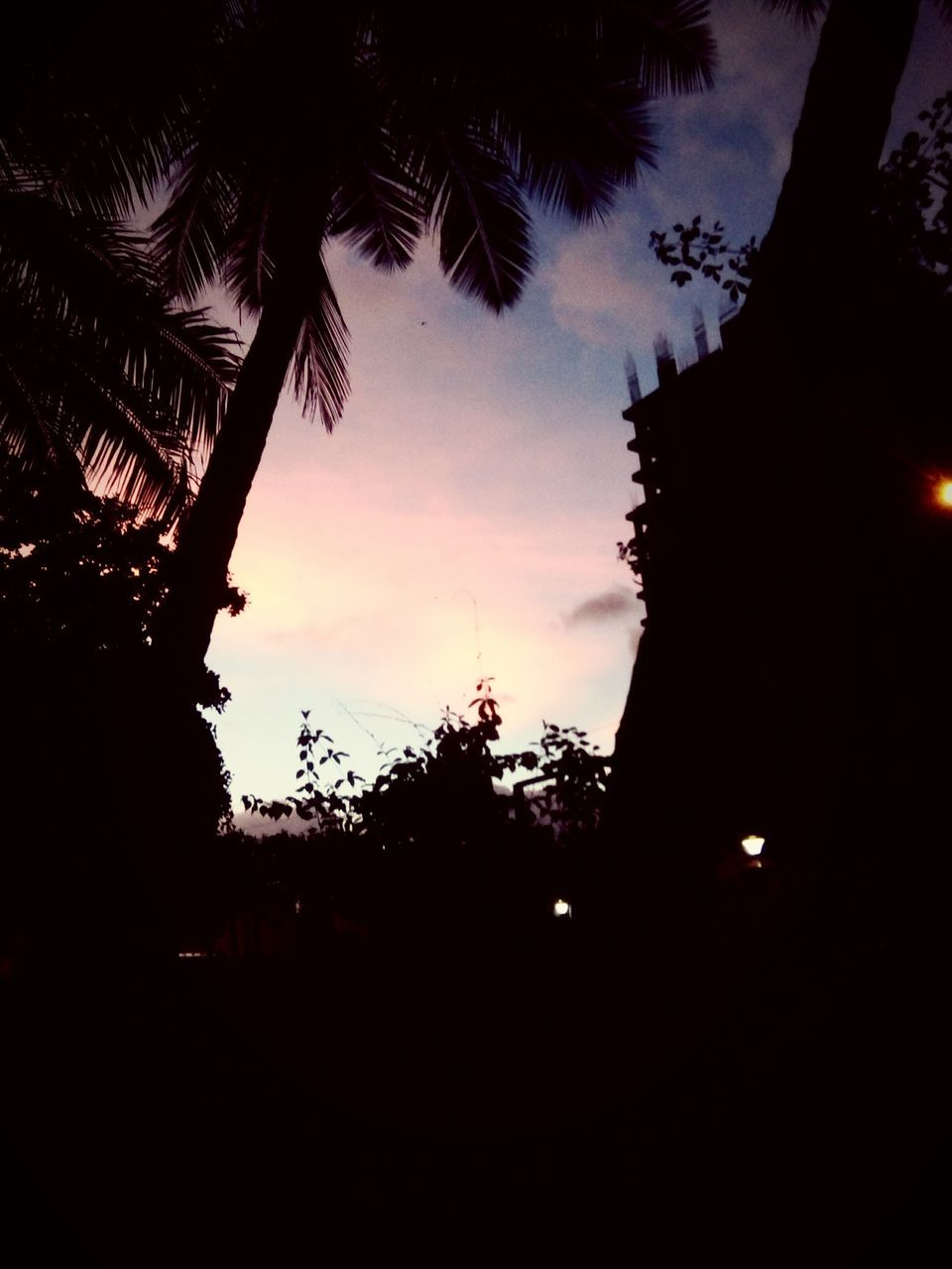 tree, silhouette, sunset, no people, low angle view, growth, sky, outdoors, nature, palm tree, beauty in nature, branch, day
