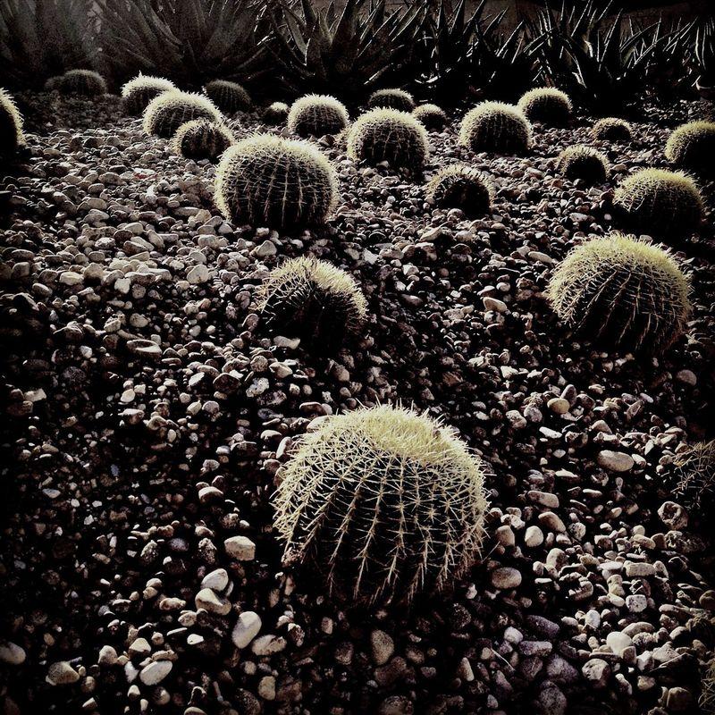 Shadowsandlight Secret Garden Blackandwhite Blancoynegro