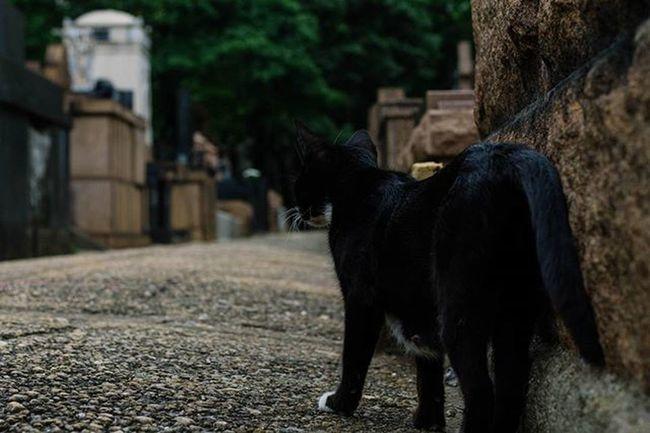 Nunca imaginei Que seria possível Encontrar um gato preto Em meio a um cemitério Em pleno dia das bruxas Seria ilusão? Estava sonhando? Então toquei-o com As pontas dos dedos E finalmente compreendi Que nãoquer era sonho O que se passava ali.