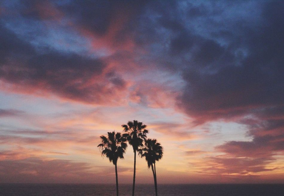 Sunsets and palm trees.🌴🌅 California California Dreaming Sunset Palm Trees West Coast American Dream Landscape Outdoors Outdoor Photography Nature