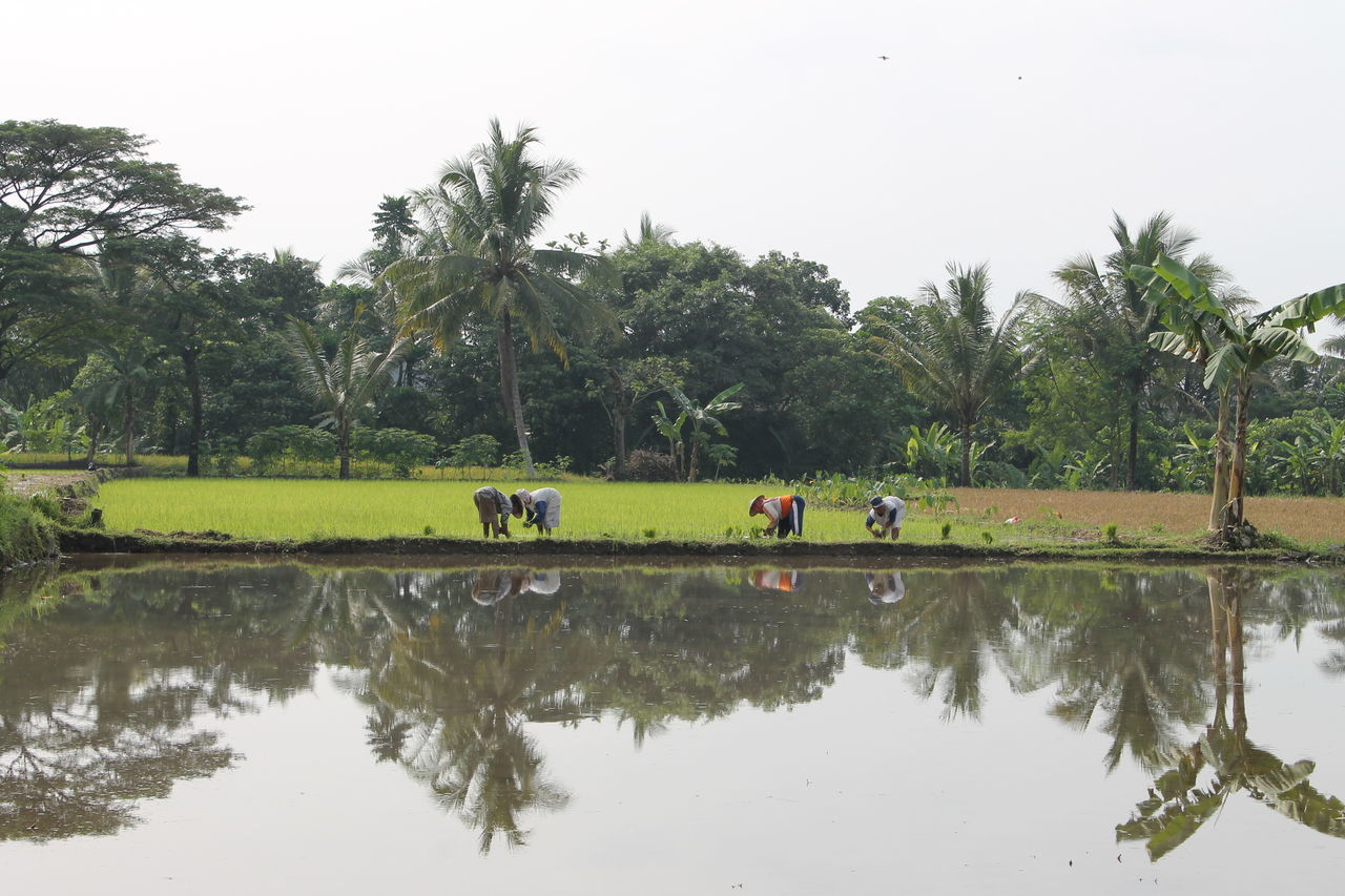 Farmers Working At Field By Lake