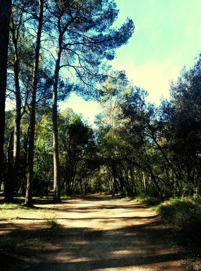 Porque todos los caminos llevan a ... uno mismo Naturelove Naturelovers Natural Beauty Nature Photography Arbres Tree_collection  Camins Lifenature Naturaleza Natura Nature_perfection Nature_collection
