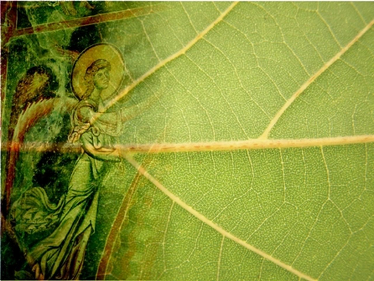 montage of a archangel gabriel from kurbinovo village in macedonia and green leaf Angel Archangel Archangel Gabriel Beauty In Nature Close-up Concept Day Fresco Paintings Freshness Green Color Growth Kurbinovo Leaf Macedonia Montage Montage Photography Nature No People Outdoors Plant Religion Vein