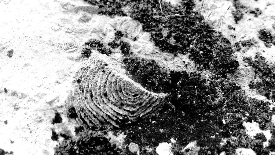 Many-many years ago there was a bottom of the sea... Nature Tranquility Non-urban Scene Shell Paleontology Evolution  Crimea Nummulites
