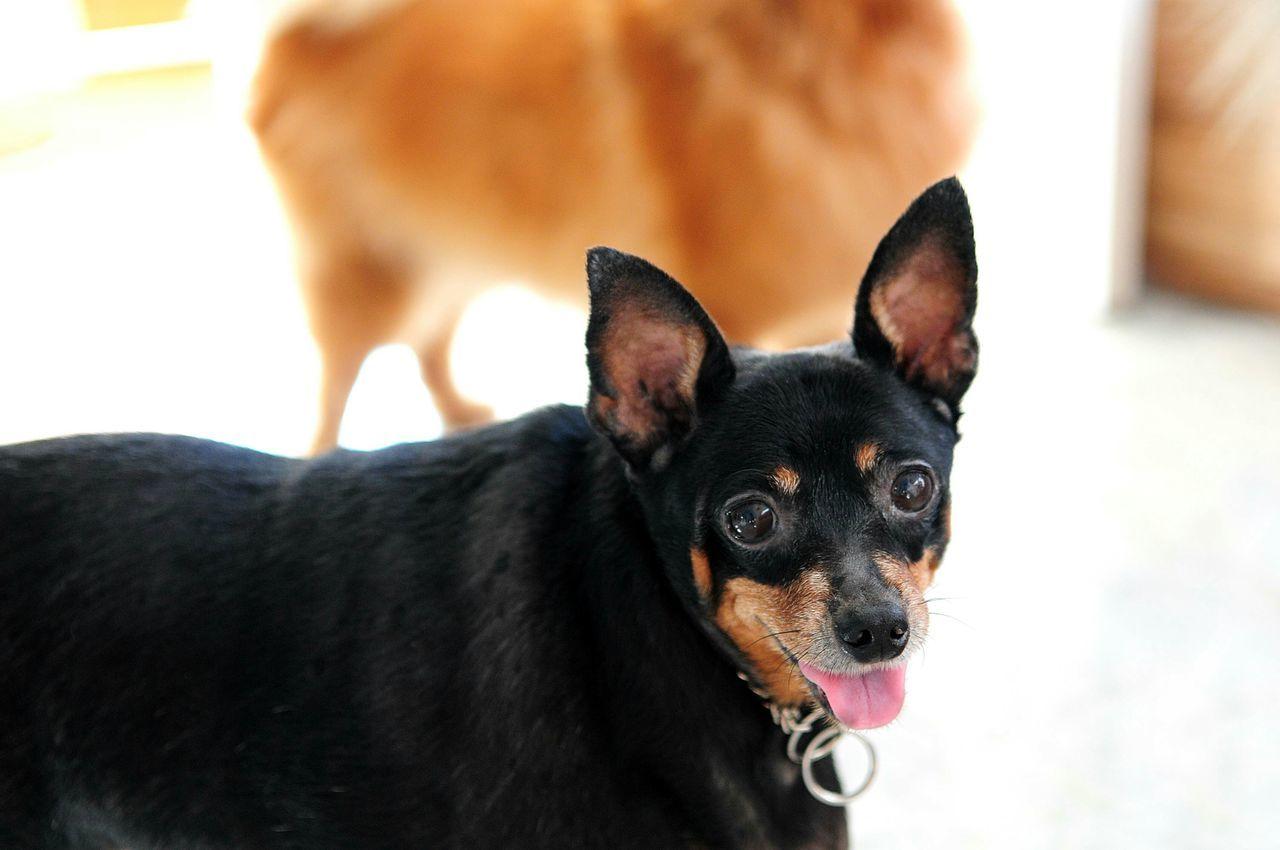 The Portraitist - 2015 EyeEm Awards Pets Pets Corner Pet Photography  Pet Dog Love Dog I Love My Dog The Moment - 2015 EyeEm Awards
