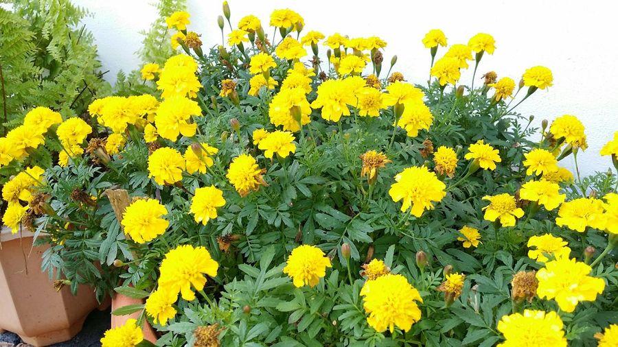 Flowers from my garden...😊