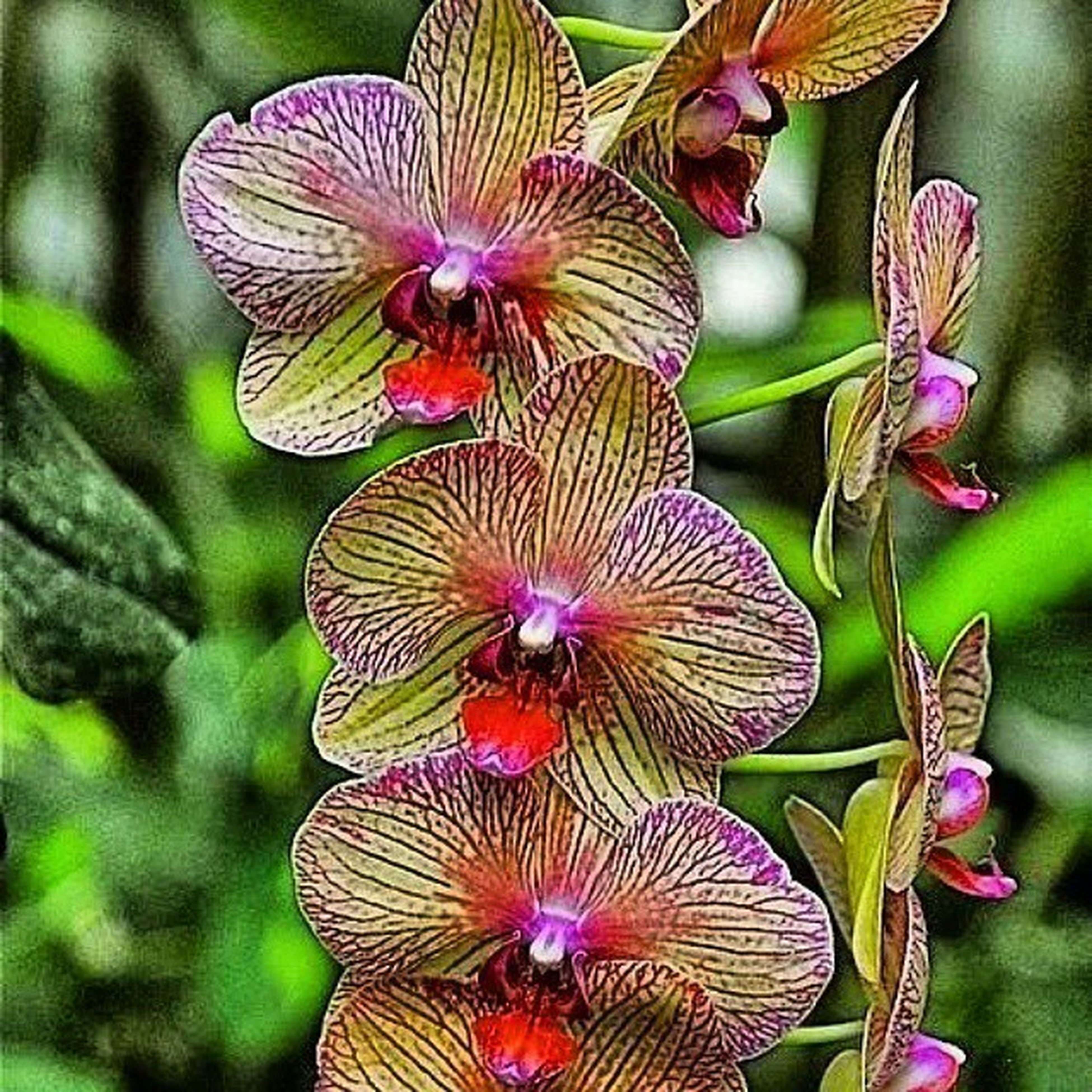 flower, fragility, petal, close-up, freshness, purple, beauty in nature, growth, flower head, plant, nature, focus on foreground, leaf, natural pattern, blooming, no people, in bloom, outdoors, day, orchid