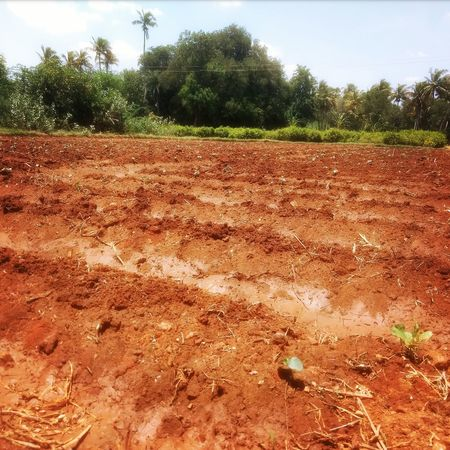 Freshness Crop  Cultivated Land Rich Soil