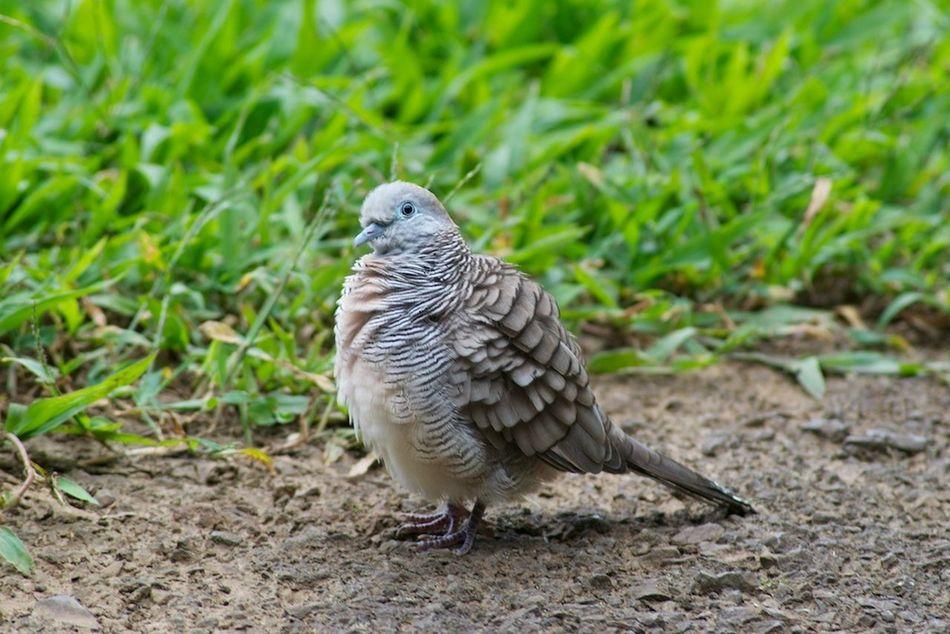 What do you guys think of this shot? My Hobby Birds Wildlife Outdoors Repost Enjoying Life Taking Photos