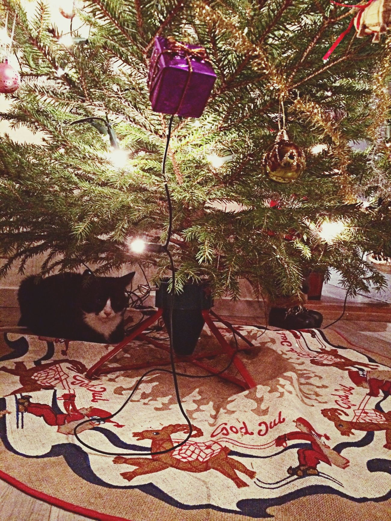 Cat Under Christmas Tree ??