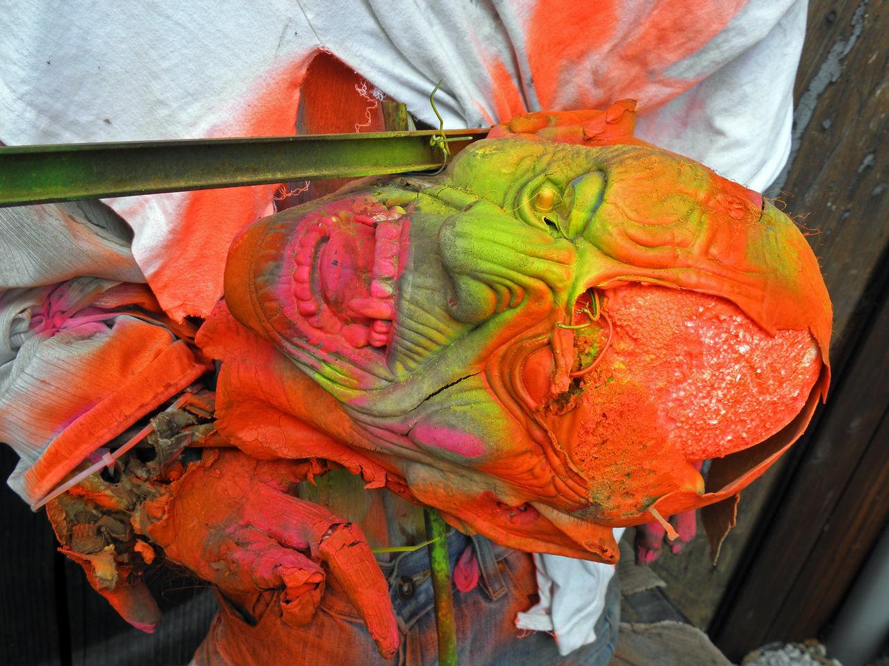 Beautiful stock photos of totenkopf, multi colored, close-up, animal themes, no people
