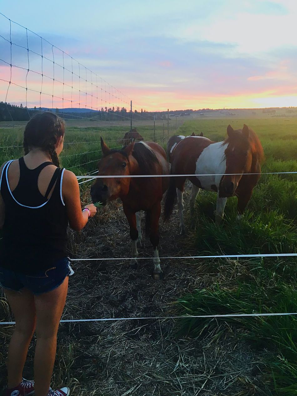 Sunset Domestic Animals Mammal Sky Outdoors First Eyeem Photo Landscape Cloud - Sky Natural Beauty Rear View Tranquility Horse Animal Themes