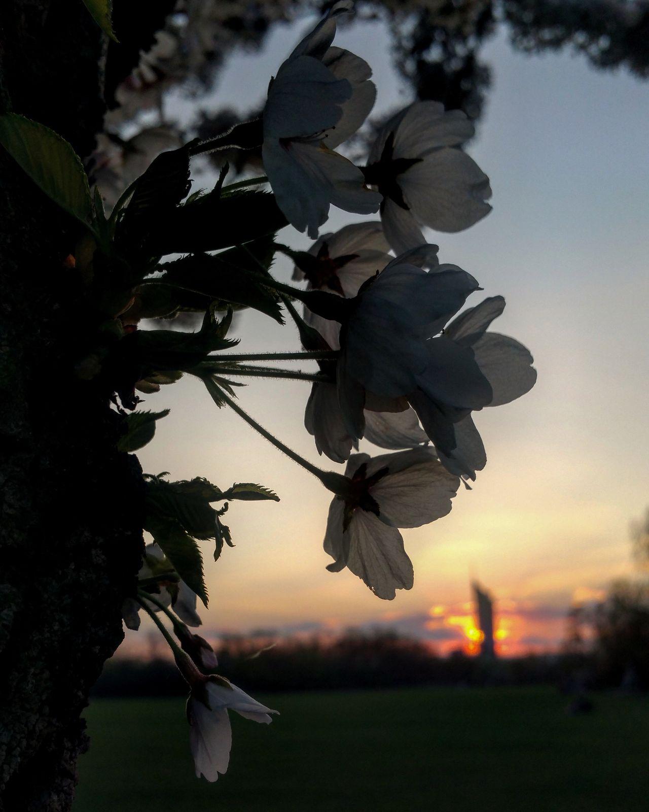 Das ist nicht die Sonne die untergeht, sondern die Welt die sich weiterdreht...♡ Beauty In Nature Millenium Tower Donaupark