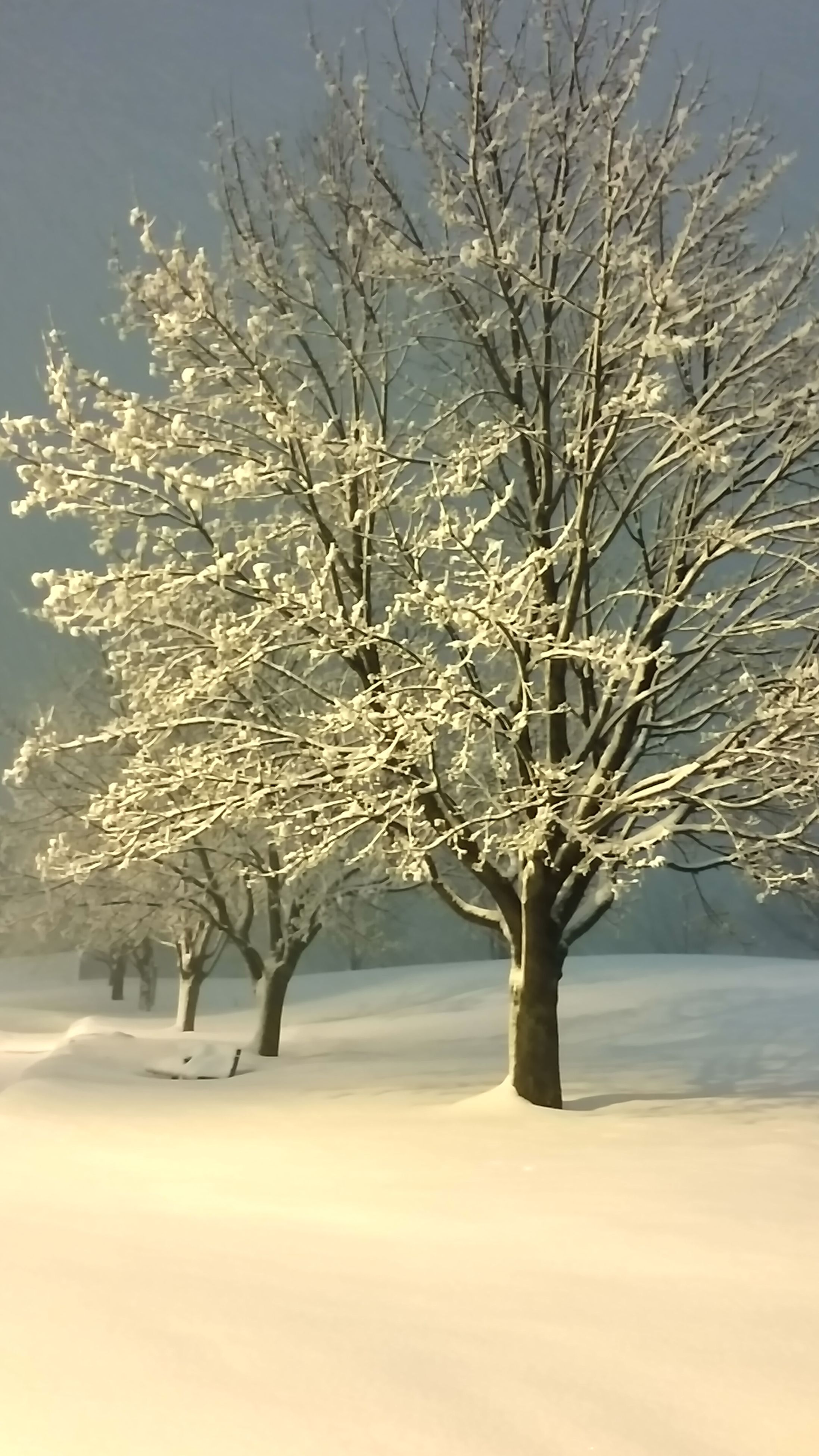 snow, bare tree, winter, cold temperature, branch, tree, tranquility, season, tranquil scene, nature, beauty in nature, landscape, scenics, field, sky, weather, frozen, covering, growth, outdoors