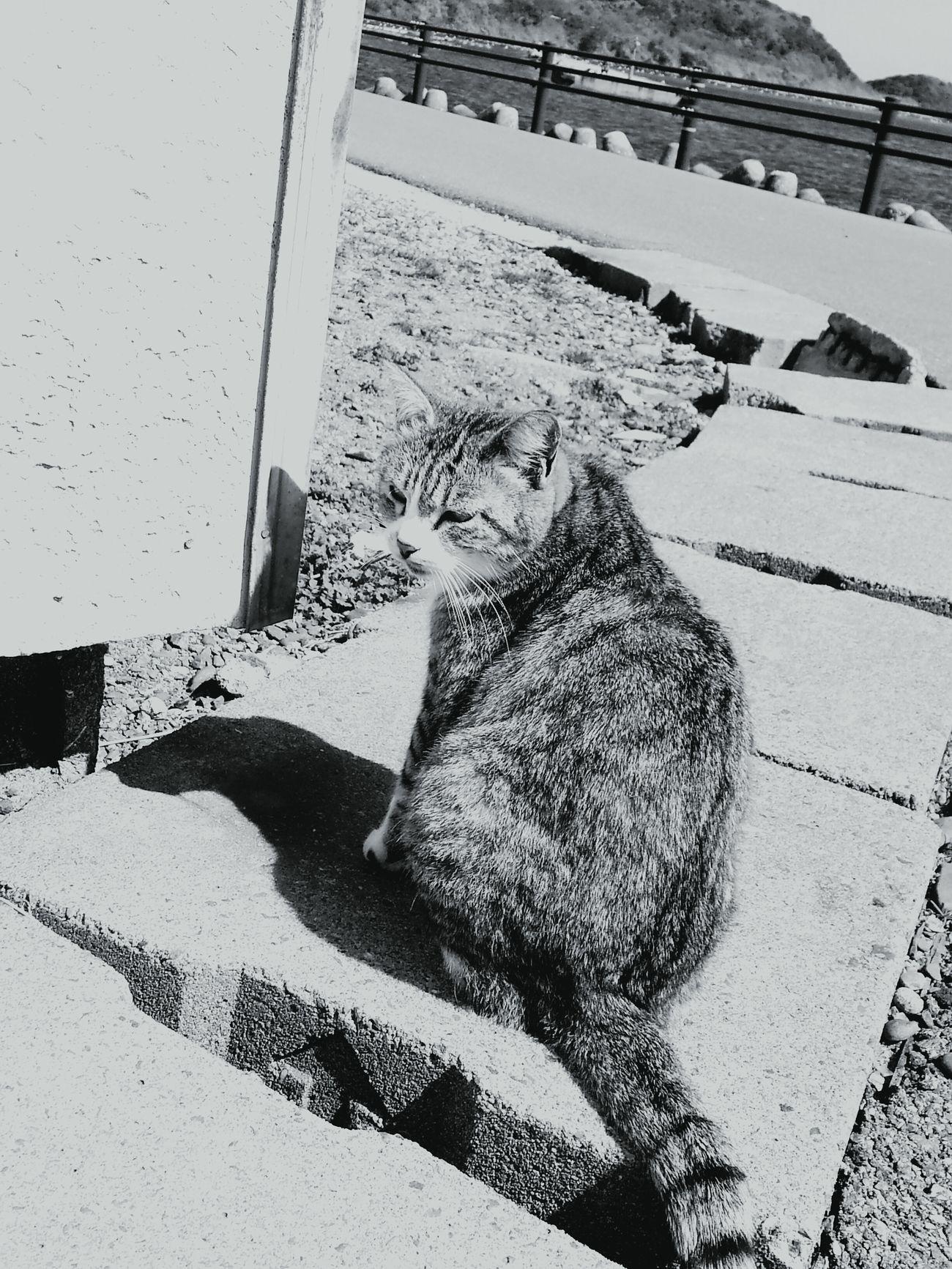福岡県 相島での1枚 First Eyeem Photo