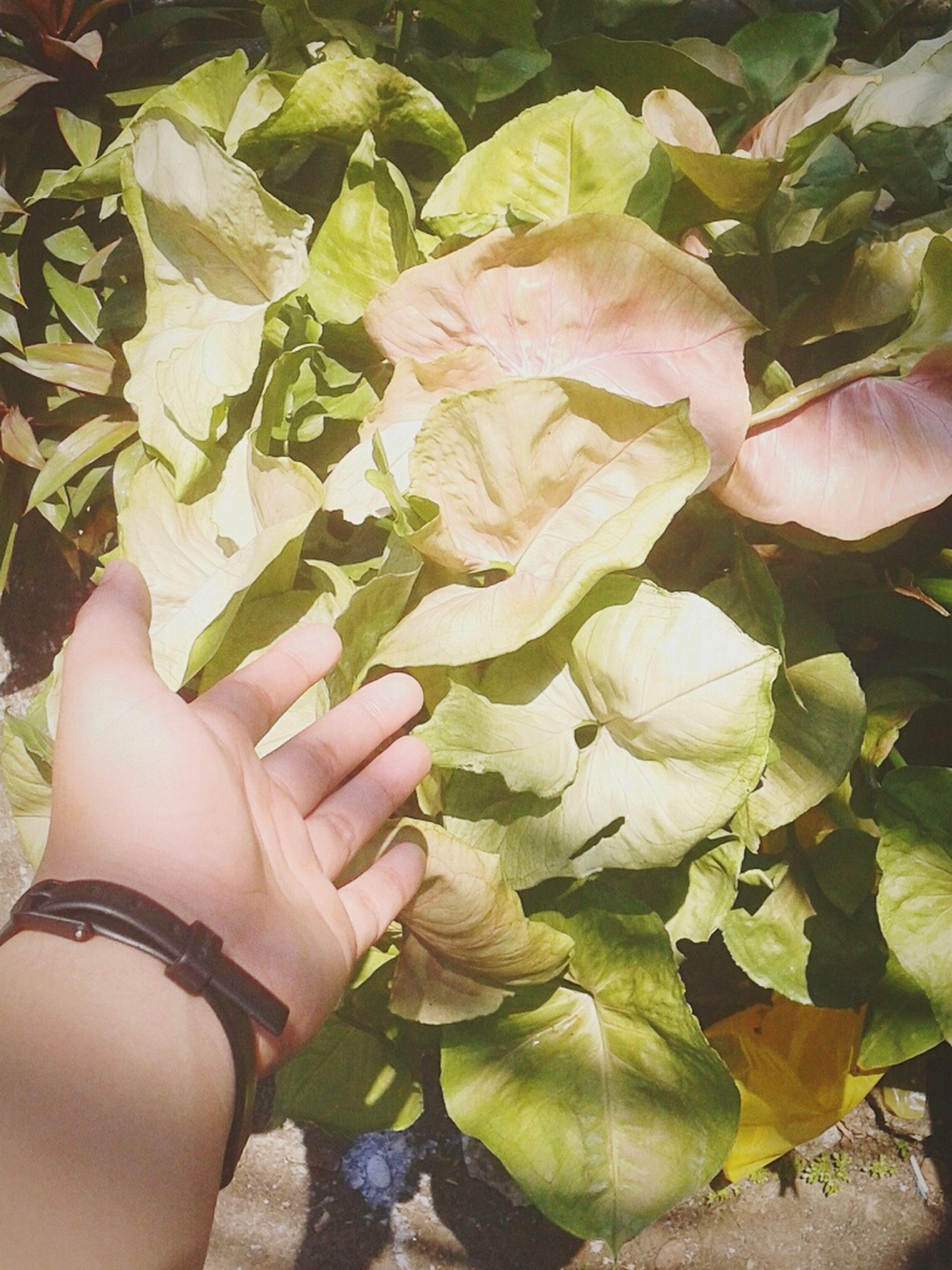 🍀🍀 EyeEm Nature Lover Leaf&hand Summer☀☀
