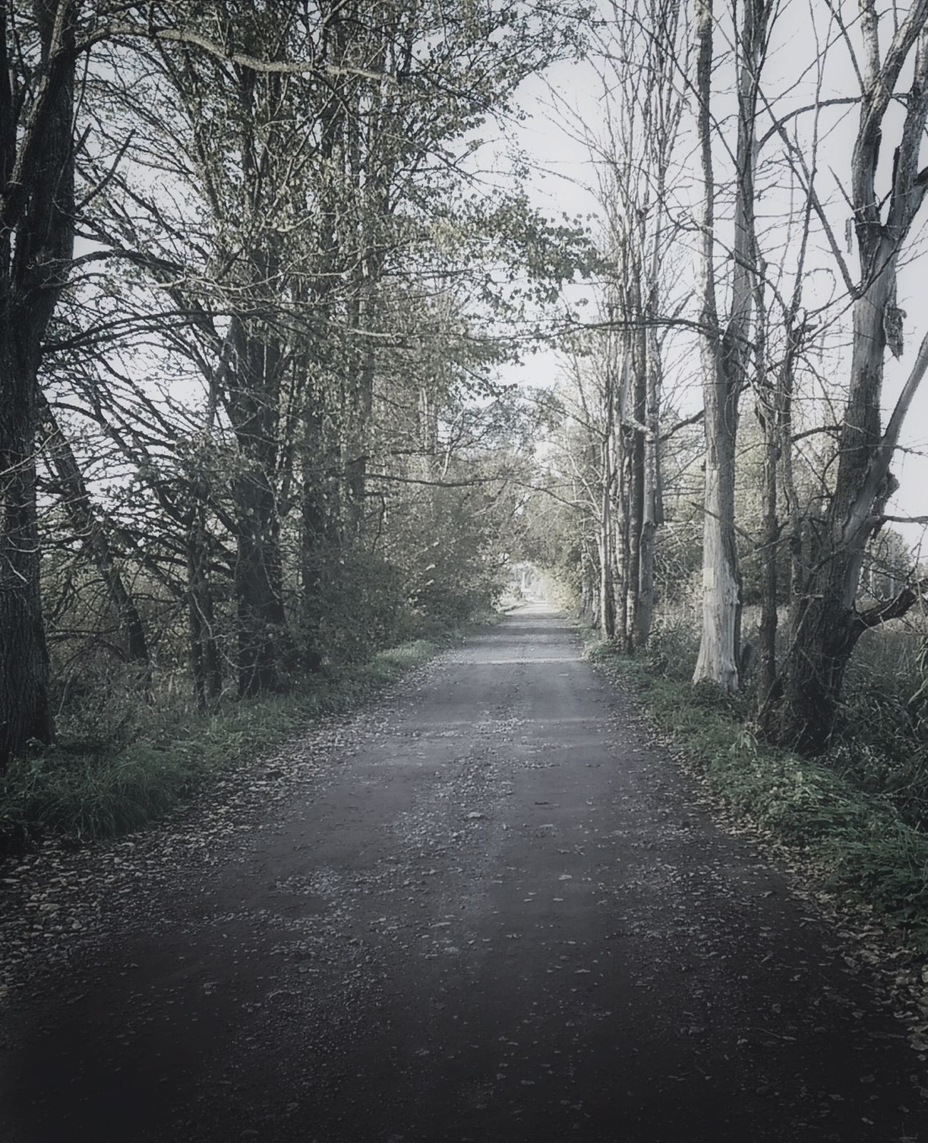 Tree Bare Tree The Way Forward Tree Trunk Tranquil Scene Forest Tranquility Diminishing Perspective Non-urban Scene Scenics Nature Long Day Vanishing Point Beauty In Nature Solitude Growth WoodLand Treelined