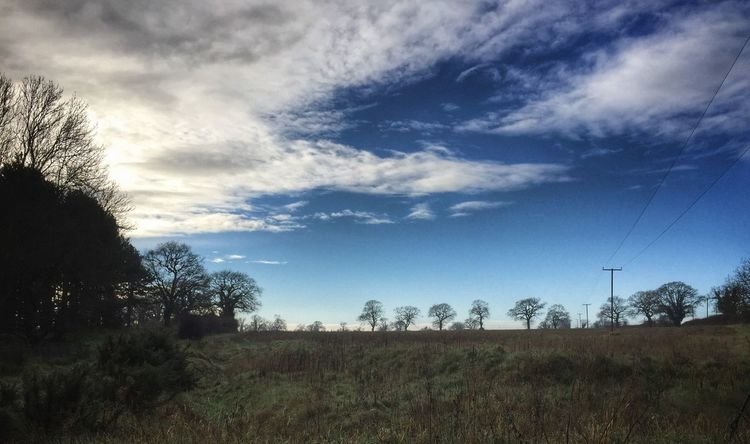 Suffolk tree line in winter. Suffolk Trees Clouds And Sky Showcase: January January Tunstall