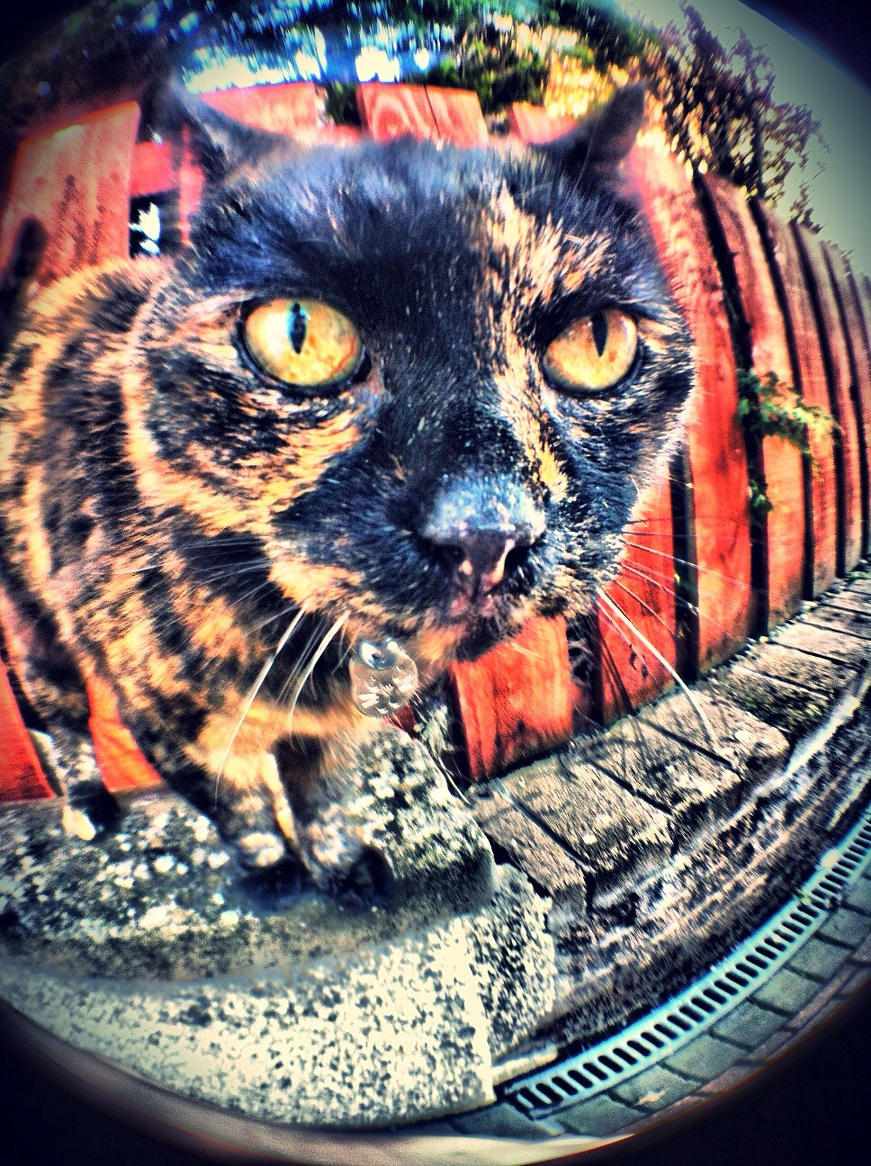 one animal, animal themes, domestic cat, cat, pets, domestic animals, indoors, feline, close-up, portrait, looking at camera, whisker, animal eye, mammal, high angle view, animal head, focus on foreground, no people, front view