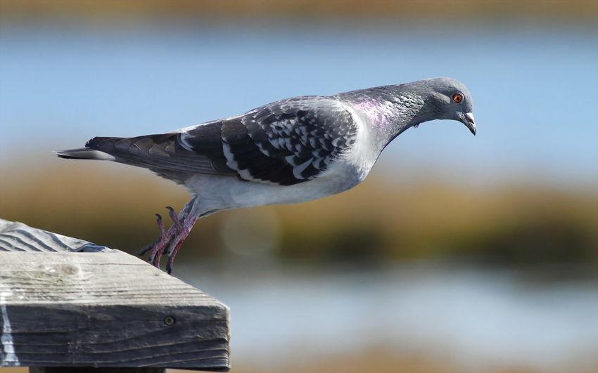 Enjoying Life Cheese! Birds Animal