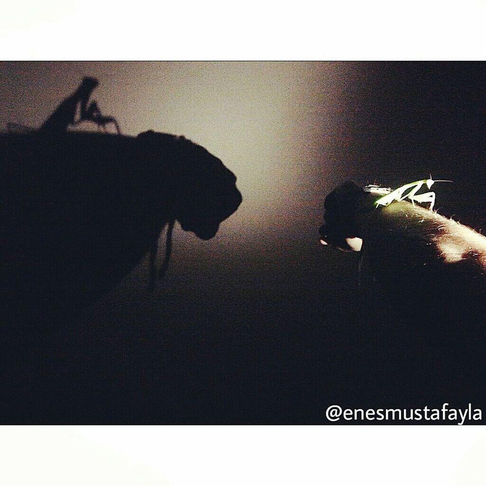 Nature Entomoloji Night University Turky Düzce Sunset Life First Eyeem Photo DüzceUniversity