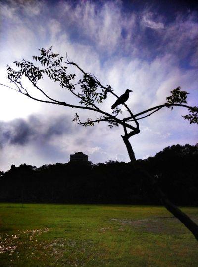 EyeEm Best Shots Nature Sky And Clouds Birds