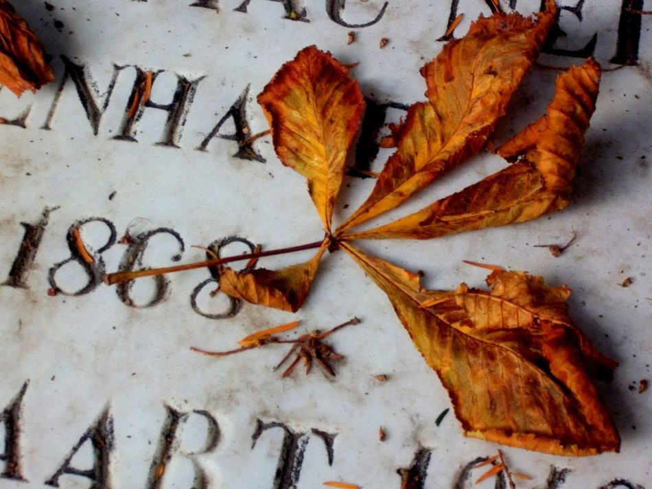 Beautiful stock photos of tombstone, Autumn, Cemetery, Christianity, Close-Up