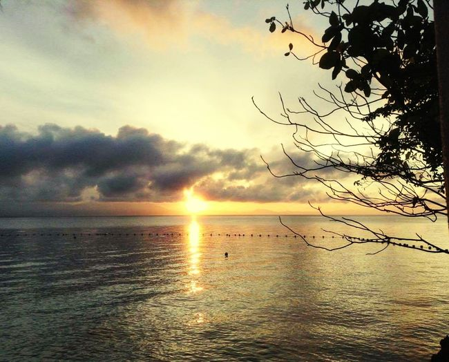Sunsets Sunset Beach Sea BeachSunset Relaxing Enjoying The Sun Trees Branches Samal Calm Water