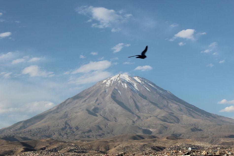 Beautiful stock photos of volcano, Arequipa Region, Beauty In Nature, Bird, Blue