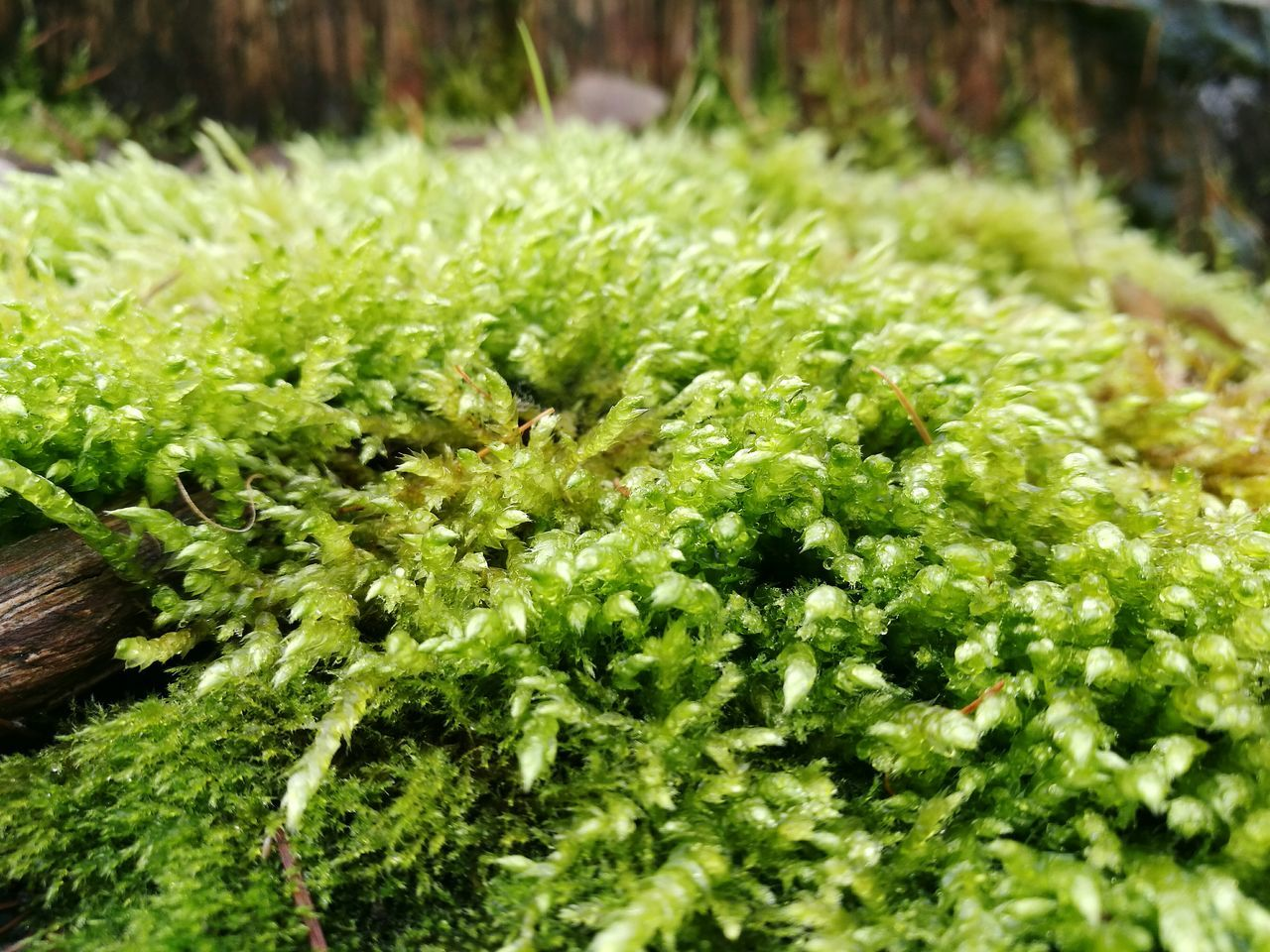 Green Color Nature Growth Outdoors Freshness Moss Forest Mosscovered Treetrunk