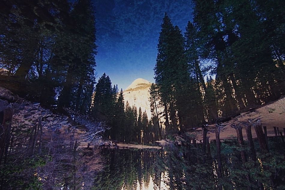 Reflections Tree Beauty In Nature Nature Sky EyeEmNewHere Yosemite National Park Park Nature Landscape Mountain Lake Tranquility Travel Destinations Outdoors Tranquil Scene Scenics
