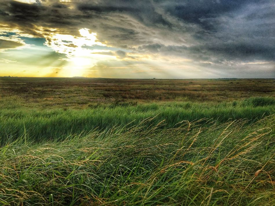 Salt Marsh between Titchwell and Thornham Landscape Beauty In Nature Sunset Sky Cloud - Sky Growth Horizon Over Land Nature Non-urban Scene Marsh Norfolk East Anglia Salt Marsh evening First Eyeem Photo