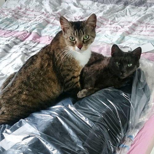 Der Mantel ist eigentlich für euren Papa, ihr frechen Miezen! 😺 Wassilita_the_cat Tshaga_the_cat
