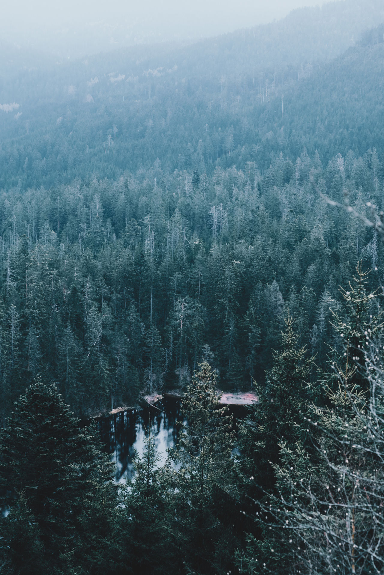 Black Forest Aerial View Architecture Backgrounds Beauty In Nature Building Exterior Built Structure Cityscape Cold Temperature Day Growth High Angle View Landscape Mountain Nature No People Outdoors Scenics Sky Snow Tranquil Scene Tranquility Tree